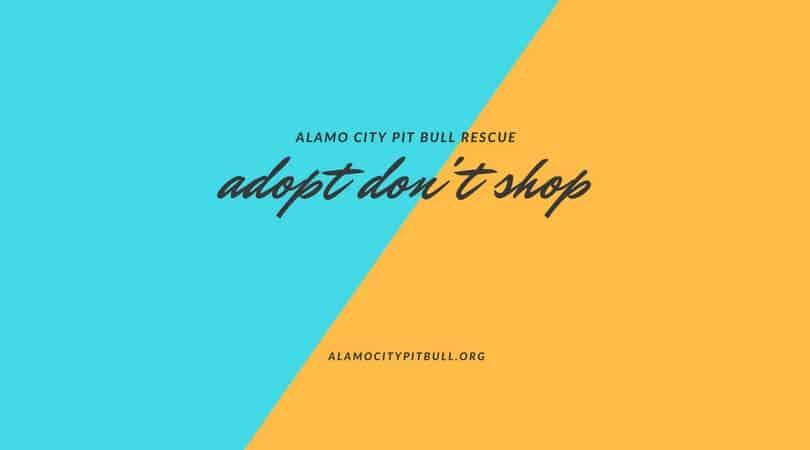 Adoption Day at PetSmart