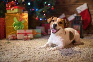 Pet Photos at Pet Supplies @ Pet Supplies Plus | San Antonio | Texas | United States
