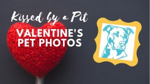 Kissed by a Pit - Pet Photos @ Kriser's Natural Pet